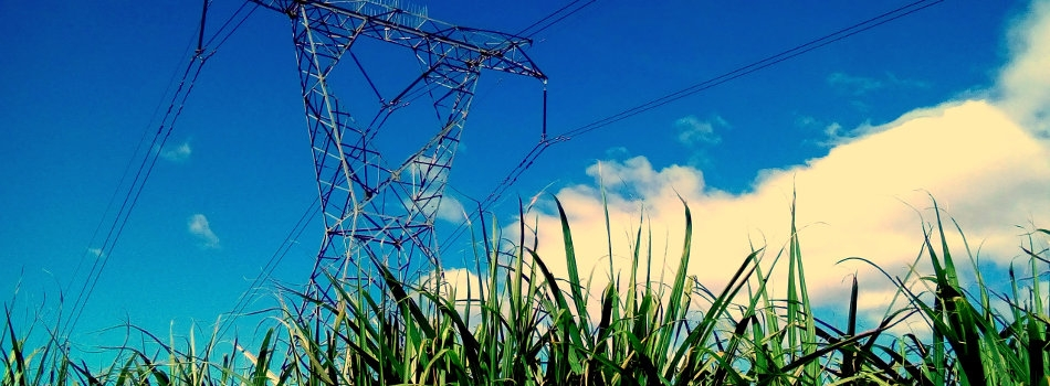 Pylon In Sugarcane Field