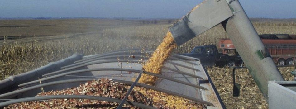 Harvesting Corn and Cob Mix