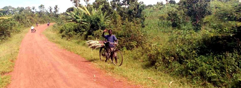 Sugarcane by Bicycle