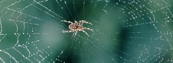 Crawling the web for furfural