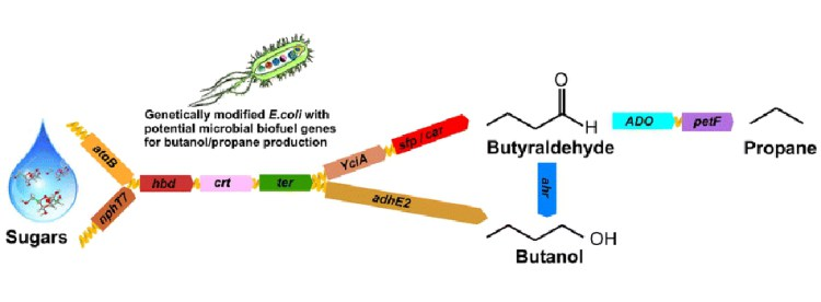 Beautiful Biotechnology for Biofuels